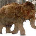 Santa Claus's North Pole Woolly Mammoth