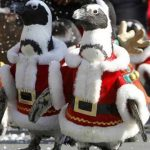 Santa Penguins March Forth For Christmas