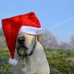 Why Doesn't Your Dog Bark When Santa Delivers Gifts?