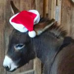 Dominic The Christmas Donkey