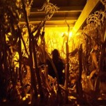 Haunted Native American Corn Maze Of Hell!