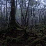 The Japan Suicide Forest