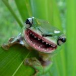The Deadly Killer Frog Of Hell