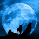 Blue Moon Werewolf Warning